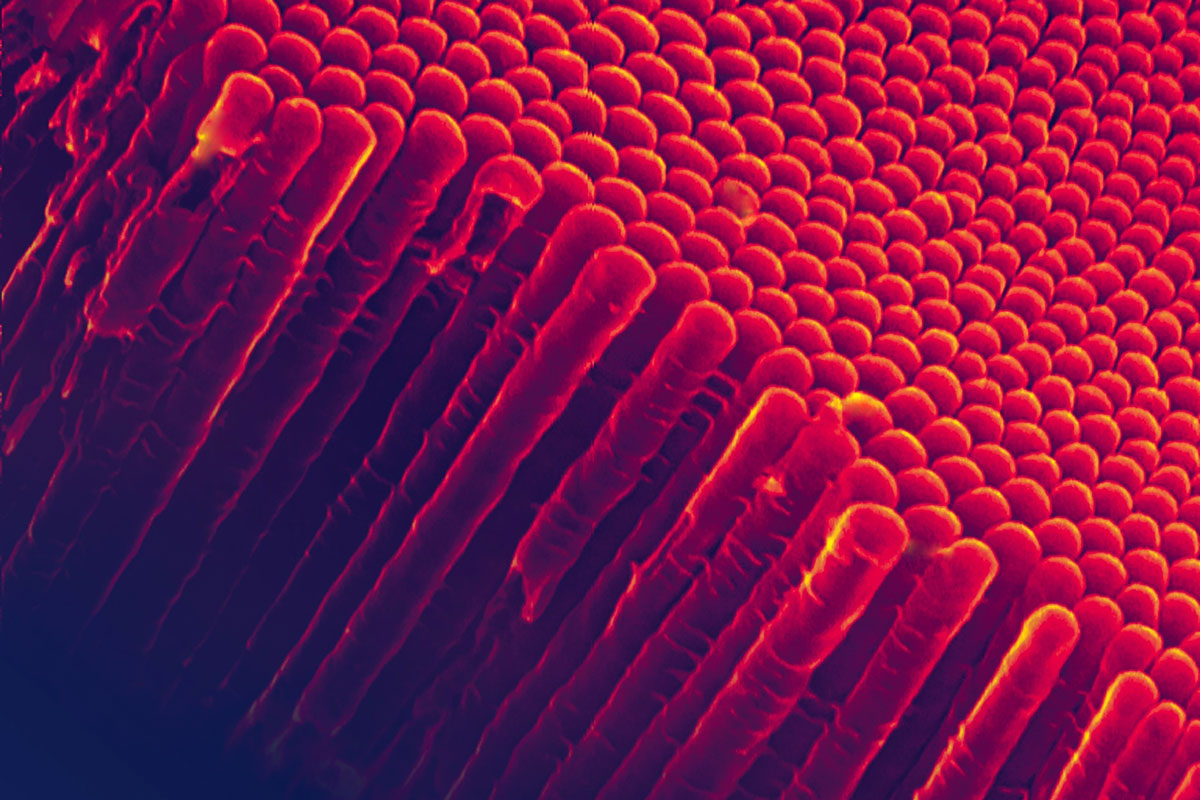 Amendments-of-EU-regulation-on-nanomaterials