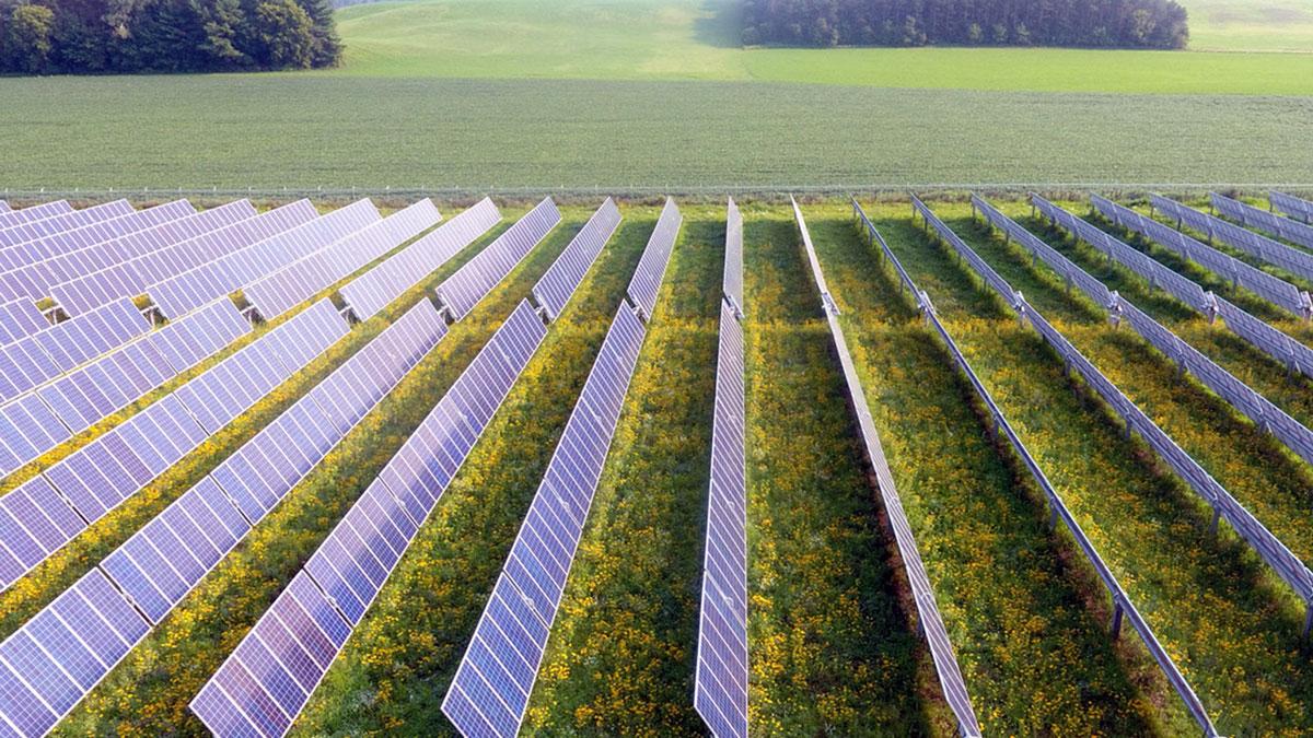 BlueWave-Solar-to-Sale-Innovative-Maine-Agrivoltaic-Solar-Project-to-Navisun